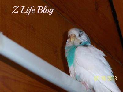 Myrtle The Bird